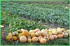 Личные подсобные хозяйства получат около 80 млн рублей на компенсацию утраченного урожая