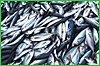 Инвестиции в рыбохозяйственный комплекс края продолжают расти