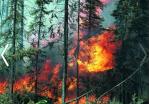 Неконтролируемый пал травы может стать причиной серьезного пожара!