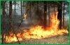 На территории края действуют три лесных пожара