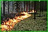 В Хабаровском крае зарегистрировано 7 лесных пожаров