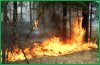 Четыре лесных пожара ликвидируют в Верхнебуреинском районе