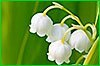 Жители Хабаровского края смогут выбрать растение-символ своего региона