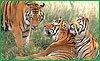 В Хабаровском крае отметят Международный день тигра
