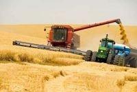 Амурские аграрии отмечают высокую урожайность зерновых