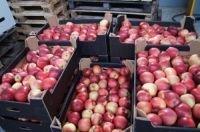Таможенники Приморья заявляют о готовности к увеличению потока фруктов и овощей из Китая