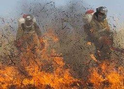 Полезная информация: чтобы избежать лесного пожара.