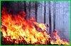Шесть лесных пожаров возникло в крае за выходные
