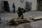 «Нет дыма без огня»: в Хабаровске прошли соревнования на «Лучшее звено газодымозащитной службы»