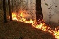 За минувшие сутки на территории ДФО действовало 10 лесных пожаров в трёх из девяти его субъектов