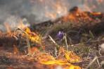 Сжигание сухой травы опасно!