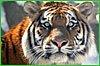 В крае отметят Всемирный день защиты животных