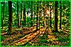 Хабаровский край присоединится к Всероссийской акции «Живи, лес!»