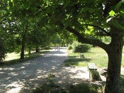 Более 9 тысяч молодых деревьев будет высажено в крае в рамках проекта «Лес Победы»