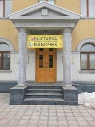 В Хабаровске открылась выставка живых тропических бабочек