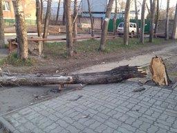 В первом микрорайоне от сильного порыва ветра упало дерево, на оживленном...