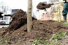 В ходе реконструкции улицы Краснореченской будет высажено 838 деревьев