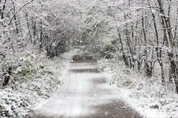 Рекомендации населению при осадках, налипании мокрого снега