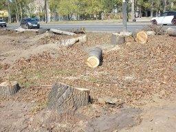 Вдоль реконструируемой ул. Краснореченской высадят более 800 деревьев