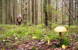 Рекомендация от спасателей: не отпускайте в лес одних пожилых людей и детей