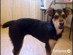 На ул. Малиновского женщина выкинула с шестого этажа четырехмесячного щенка