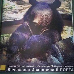 Гималайская медведица в Приамурском зоосаде под опекой губернатора