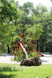 Последствия тайфуна в парке Динамо
