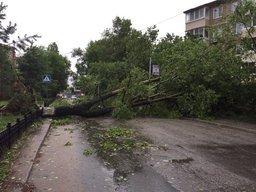 10 000 рублей - столько стоит убрать одно дерево в Хабаровске