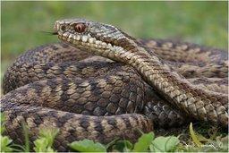 Спасатели предупреждают: в хабаровских лесах активизировались ядовитые змеи