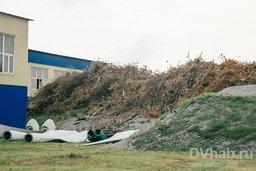Судьба упавших деревьев во время тайфуна в Хабаровске