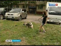 В Березовке зафиксировано массовое отравление собак