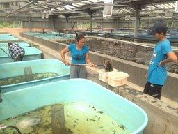 Анюйский рыбоводный завод выпустил в Амур 48 тысяч мальков осетра