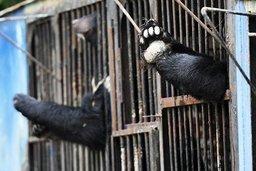 В подтопленном зоопарке Уссурийска медведи уснули от усталости