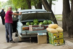 Хабаровские фермеры сообщают о больших убытках из-за неурожая овощей