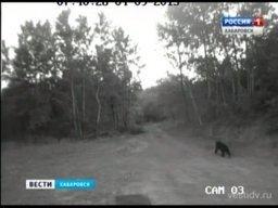 В Хабаровске был замечен медведь
