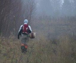 Советы спасателей: как не заблудиться в лесу