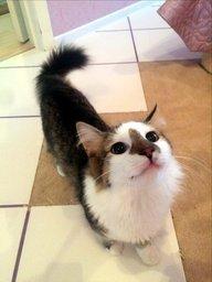 »щем хоз¤ина дл¤ котика