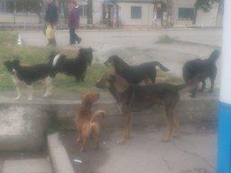 Участились случаи нападения бродячих собак на жителей села Некрасовка, рассказали amurmedia