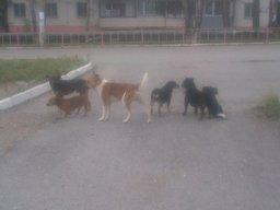 Бродячие собаки покусали ребенка в пригороде Хабаровска