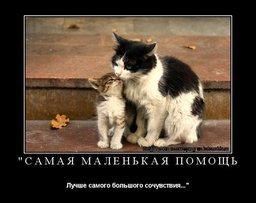 Хабаровские зоозащитники проведут пикет за отмену закона об эвтаназии бездомных животных