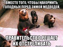 В Хабаровском крае власти ликвидировали около 60 опасных медведей