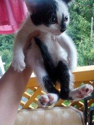 Отдаём в заботливые руки котёнка