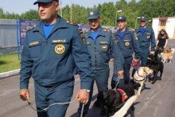 На Камчатке начались сертификационные испытания кинологических расчетов МЧС России