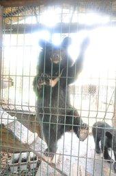 Центр реабилитации диких животных «Утес» просит хабаровчан помочь прокормить маленьких медвежат