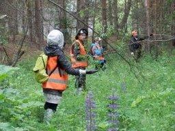 Грибники, пропавшие вблизи населенного пункта Галичный, найдены