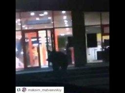 В Хабаровске ОМОН застрелил медведя, ворвавшегося ночью в торговый центр