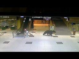 Медведь забежал в торговый центр на Пионерской в Хабаровске (ВИДЕО)
