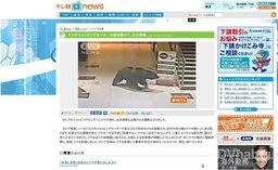 Новость о медведе, погулявшем по торговому центру в Хабаровске, уже облетела зарубежье