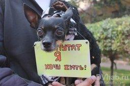 Около сотни хабаровчан со своими кошками и собаками приняли участие в пикете против эвтаназии бездомных животных