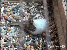 Хабаровский полицейский спас перелетную птицу от уличных кошек